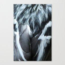 Mniotilta varia Canvas Print