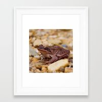 frog Framed Art Prints featuring Frog by MehrFarbeimLeben