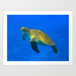 Wildlife: Green Turtle I Art Print