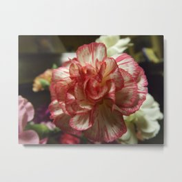 Red and White Carnation Metal Print