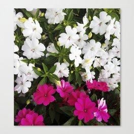 Patient Impatiens - Deep Pink and Sparkling White Canvas Print
