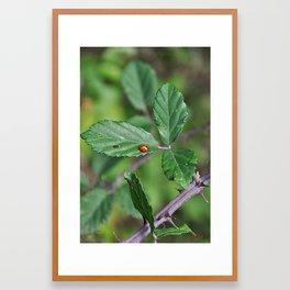 Ladybird Framed Art Print