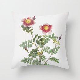 Vintage Variegated Burnet Rose Illustration Throw Pillow