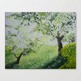 White Spring Canvas Print