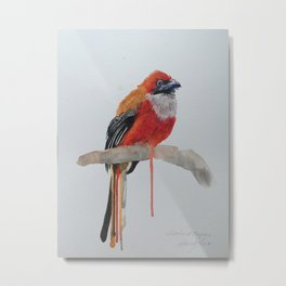 Watercolour Whitehead Trogon Metal Print