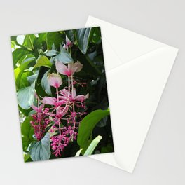 Pink Lanterns II Stationery Cards