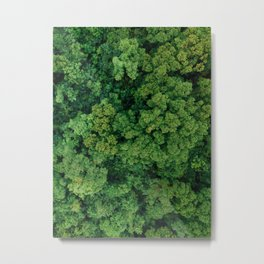 Greenery Forest (Color) Metal Print