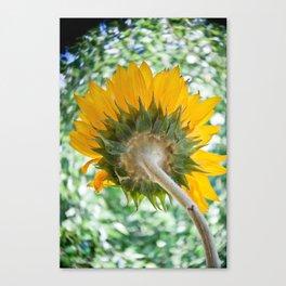 Sun Stalk Canvas Print