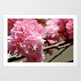 Pink Flowers I Art Print