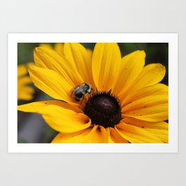 Pollinating the Summer  Art Print