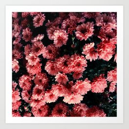 Flowers / Atchison, KS Art Print