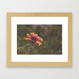Texas Wildflower Framed Art Print