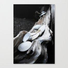 Sand Dollar Driftwood Canvas Print