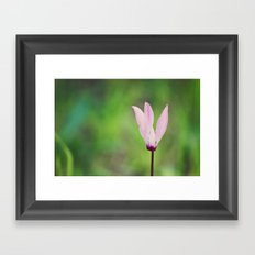 Pink Cyclamen Framed Art Print
