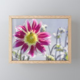 Delicious Dahlia Framed Mini Art Print