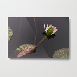waterlily-2 Metal Print