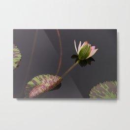 waterlily-2 Metal Print