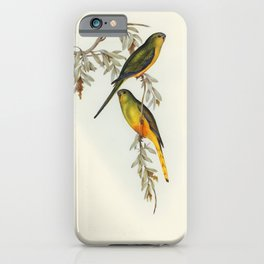 Orange-bellied Grass-Parrakeet (Euphema aurantia) illustrated by Elizabeth Gould (1804-1841) for Joh iPhone Case