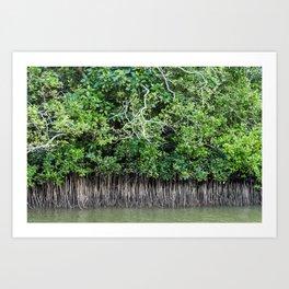 Daintree Rainforest- Mangroves Art Print