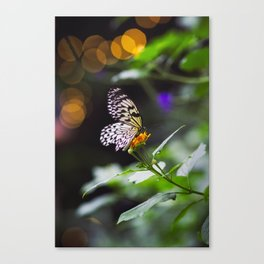 Butterflies + Twinkle Lights 1 Canvas Print