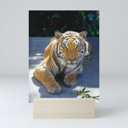 Tiger Face Mini Art Print