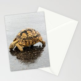 Leopard tortoise drinking on wet road Stationery Cards