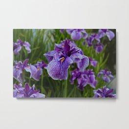 Garden Party (irises) Metal Print