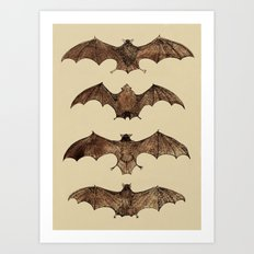 Bats zoology illustration Art Print