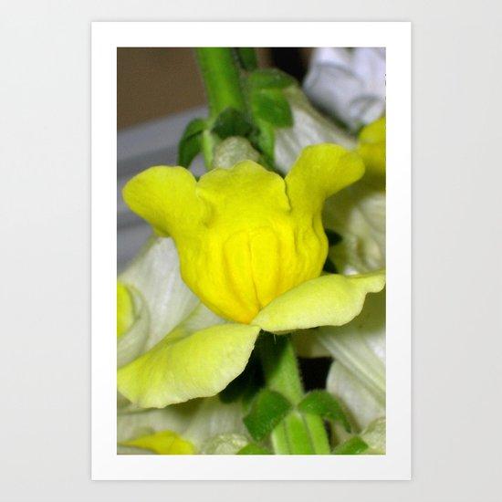 flora VI Art Print