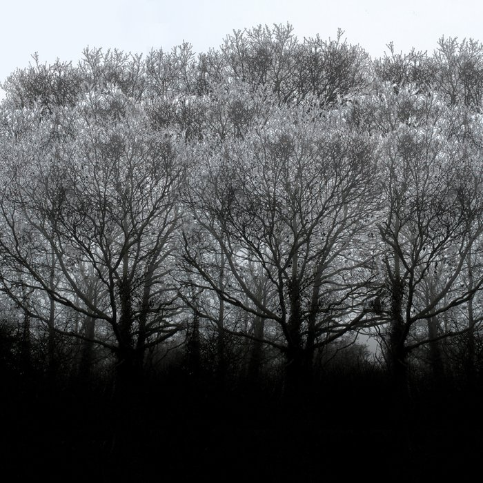 The trees of the mind are black. ' Comforters