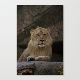 Lion! Canvas Print