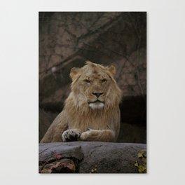 Lion! Canvas Print