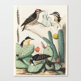 Woodpeckers And Cacti Canvas Print