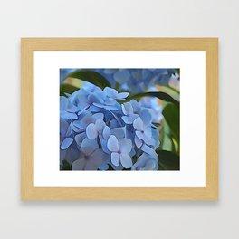 Periwinkle Hydrangea Framed Art Print