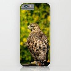 Hawk in sunflowers iPhone 6s Slim Case