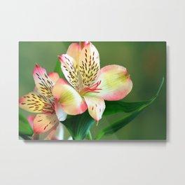 Beautiful Lillies Metal Print