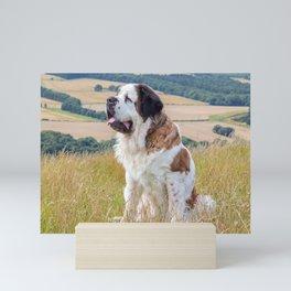 St Bernard dog Mini Art Print