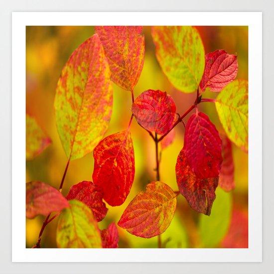 Red autumn leaves Art Print