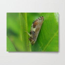 hopper bug Metal Print