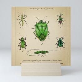 Vintage Entomology Plate, Green Insects Mini Art Print