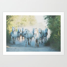 Camargue Horses ... Art Print