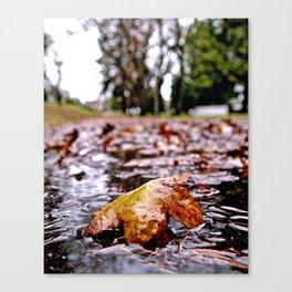 Wet Autumn leaf Canvas Print