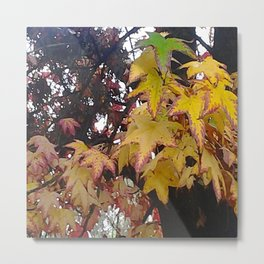 California Leaves In Fall Metal Print