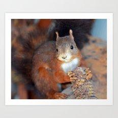 Red Squirrel (Sciurus vulgaris)  Art Print