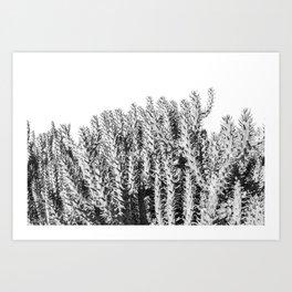 Black and white cactus photography, Large catus modern minimalist photo, desert cactus boho decor  Art Print
