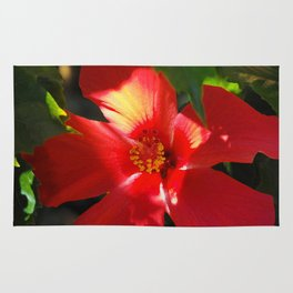 Red Hibiscus in Sunlight Rug