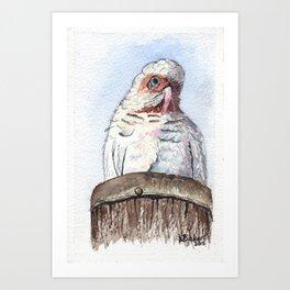 Corella Art Print
