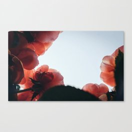 in roses Canvas Print