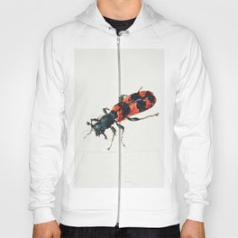 Insect from Sheet of Studies of Nine Insects (1660-1665) by Jan van Kessel Hoody