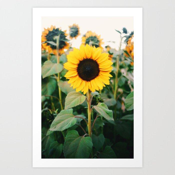 Sunny Kunstdrucke